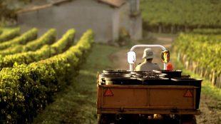 Guia de compras das safras mais recentes de Bordeaux: 2014, 2015 e 2016