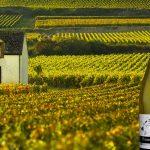 Pré-venda - Champagne Dosnon & Lepage Recolte Brute Extra Brut