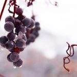 Era dos Ventos: uma vinícola como você nem imagina