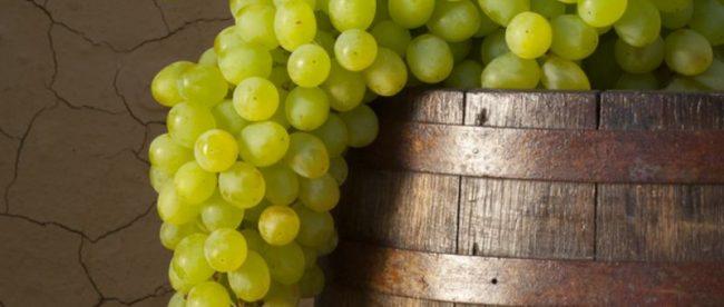 por que nao vinho branco