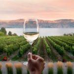 Vinho Biodinâmico