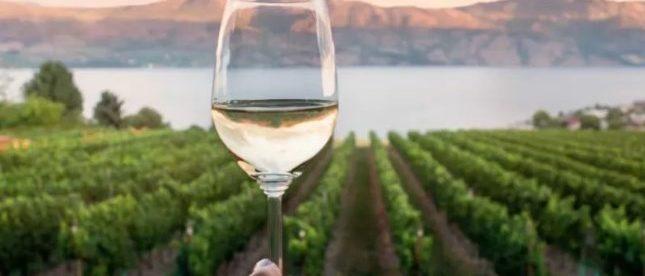 vinho biodinamico