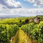 Tendência para 2017: os vinhos da Alemanha em destaque