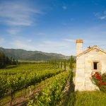 Napa: a acidez das uvas e a suavidade do verde