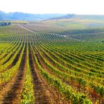 Alentejo: onde as tágides tomam vinho
