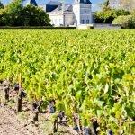 Guia Definitivo de Bordeaux - parte I: contextualização