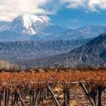 Guia Argentina 3: As uvas