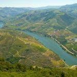 Tradição e modernidade na indústria de vinhos