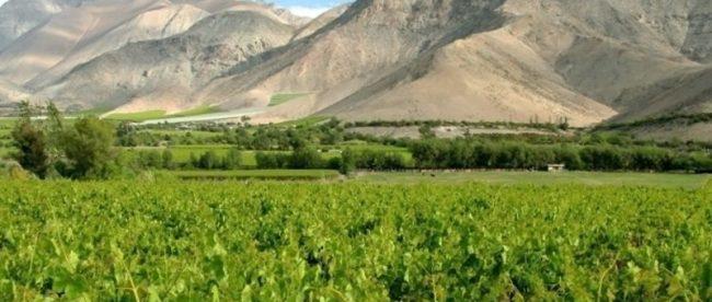 Chile: a magia das uvas tintas e da Cordilheira