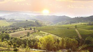 O Velho e o Novo Mundo dos vinhos