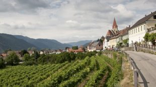 Áustria: o reino das uvas brancas