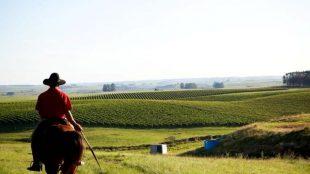 Campanha gaúcha é o futuro dos vinhos brasileiros?