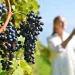 Dia do Enólogo – A melhor hora de comprar vinhos