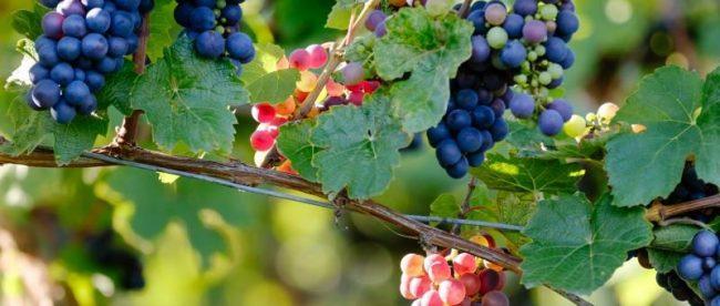 Guia Definitivo dos Vinhos de Bordeaux