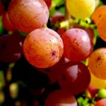 Gewürztraminer, a uva alemã da Itália