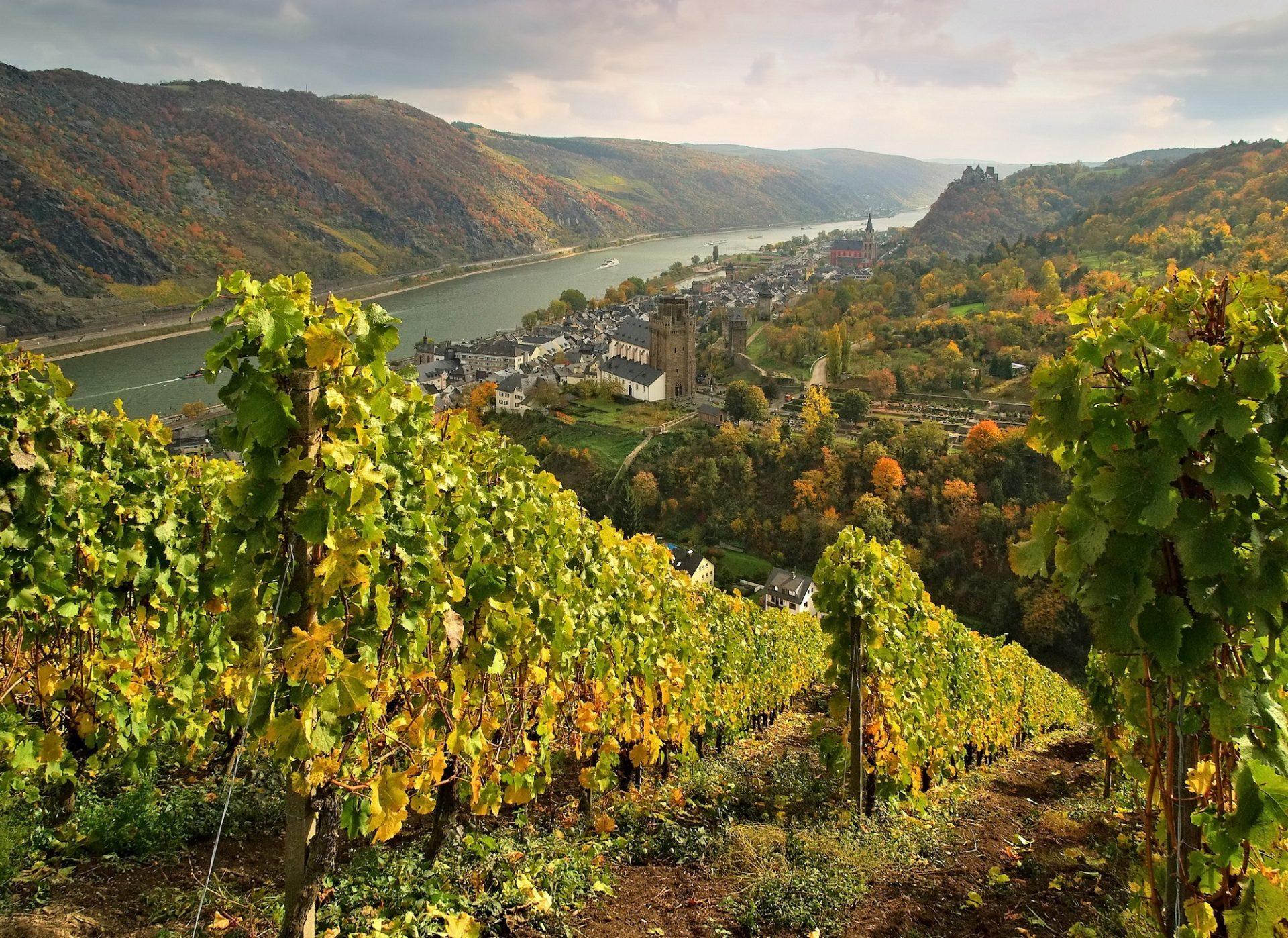vinhos brancos alemaes safras premiadas inundacoes 1
